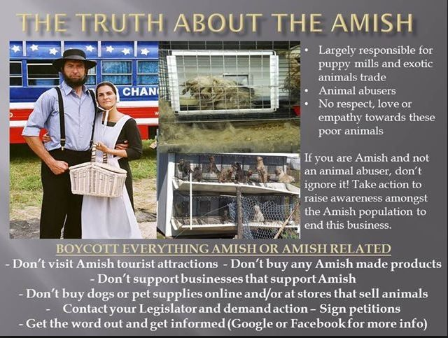 Puppy mills: let's put an end to them | ABOUT MORKIES