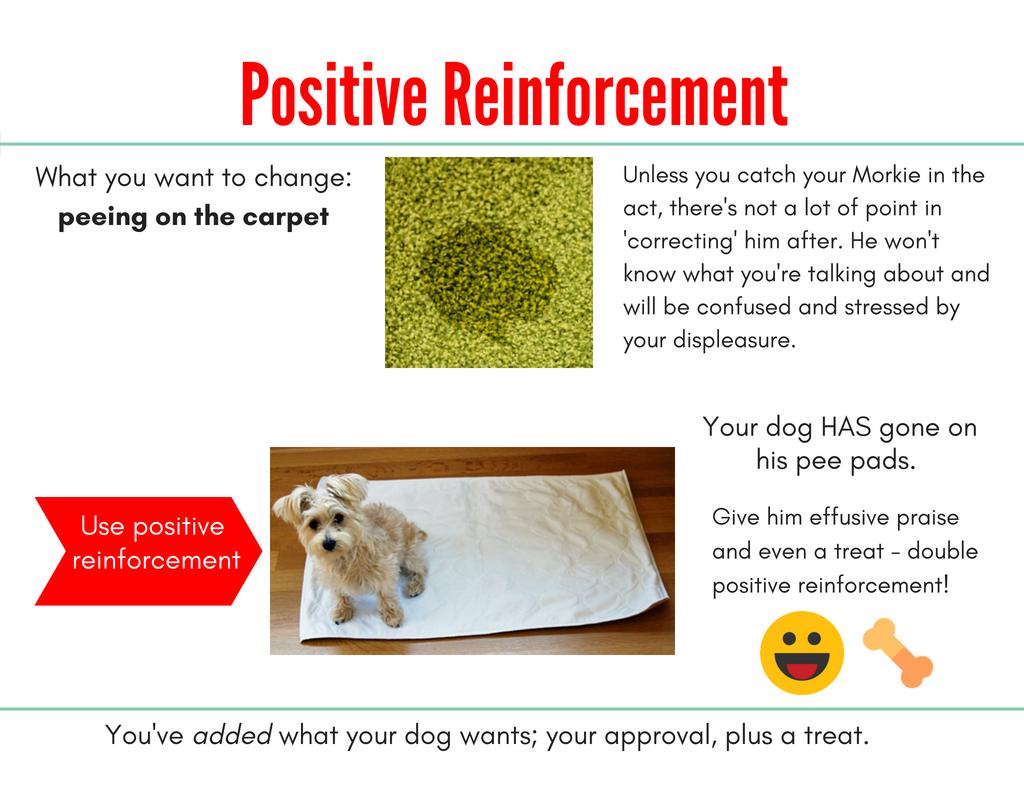 dog housetraining