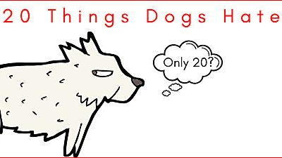 20 Things Your Dog Hates