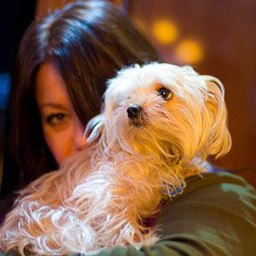 Jann Arden's morkie called midi