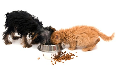 The BEST commercial dog food – dry food
