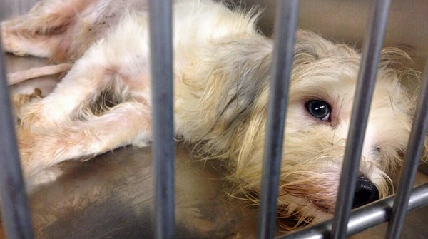 A real life lesson in avoiding a puppy mill