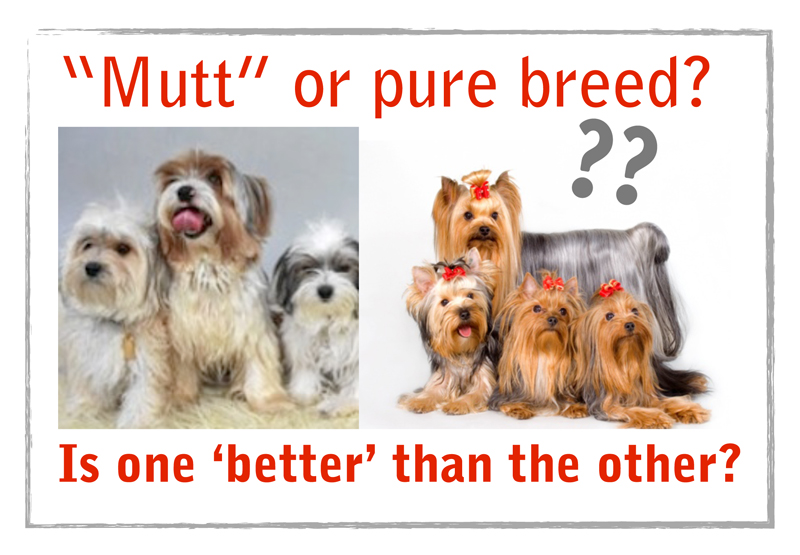 Feel guilty about having a purebred dog?