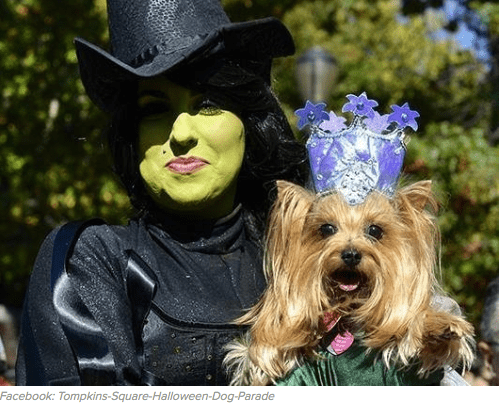 Roundup of best small dog Halloween costumes on the web