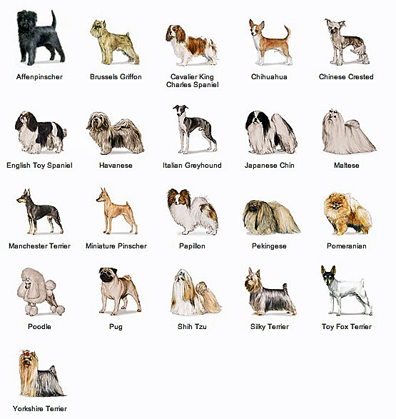 akc-toy-dogs-chart
