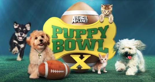 puppy bowl is part of super bowl celebrations