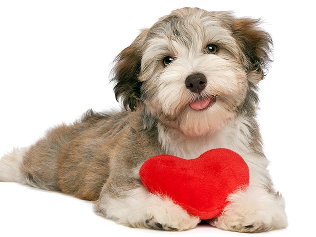 be my valentine says this cute dog