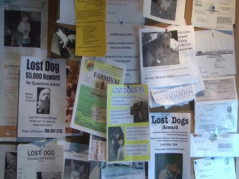 lost dogs posters are everywhere