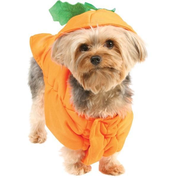 little dog in pumpkin costume