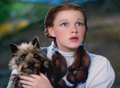 dorothy and toto frame from the movie