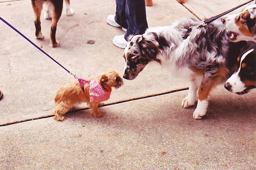 The dog leash – retractable or not?
