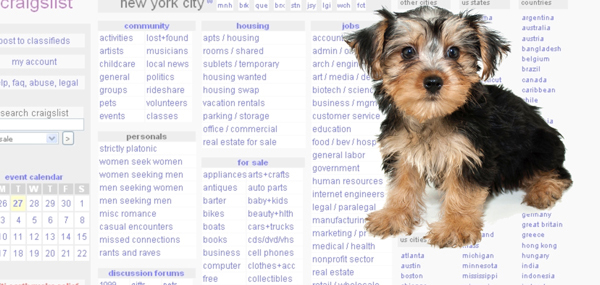 Craigslist Pets: why they're a disaster | ABOUT MORKIES