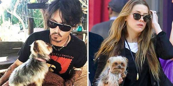 Johnny Depp and his dogs