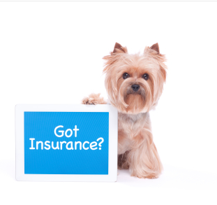 got insurance for your morkie