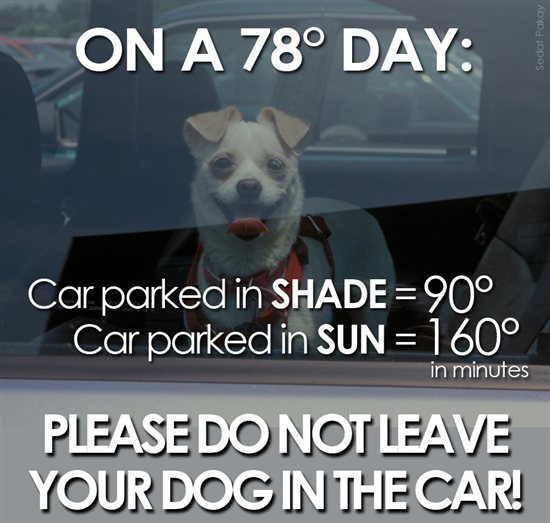 Don't leave dogs in hot cars. Simple, right?