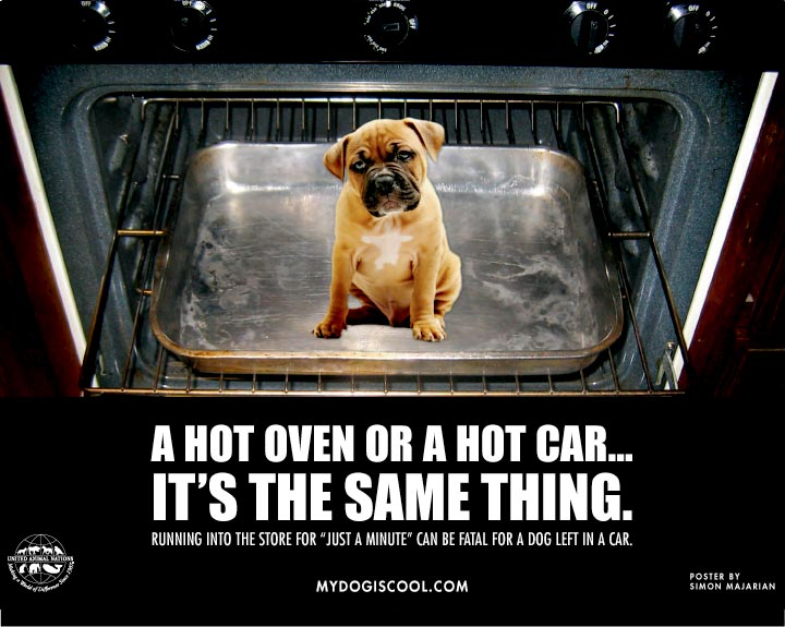 a hot car is the same as an oven for your dog