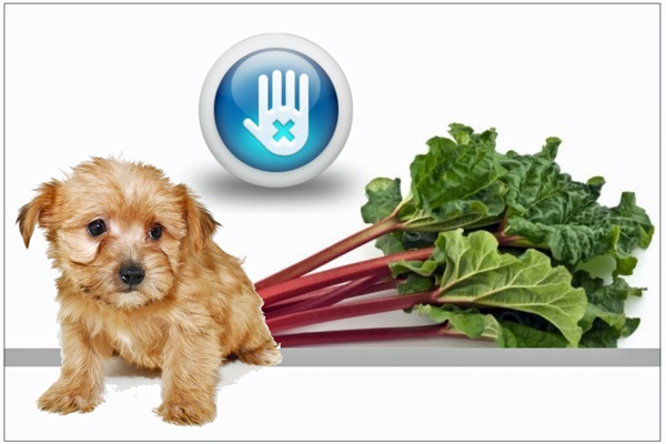 Quiz: the veggie we think is a fruit, that dogs can't eat?