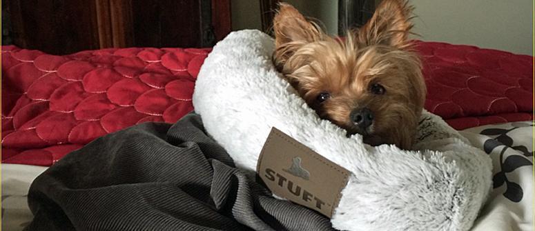 should my dog sleep in my bed