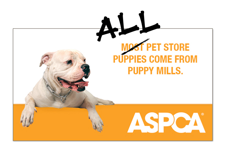 All dogs in petstores come from puppy mills