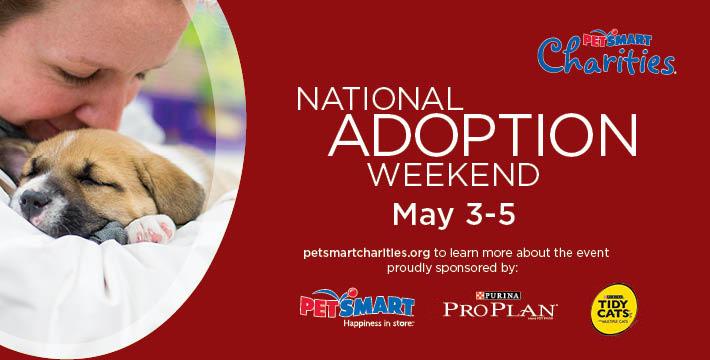 US National Adoption Weekend Dog