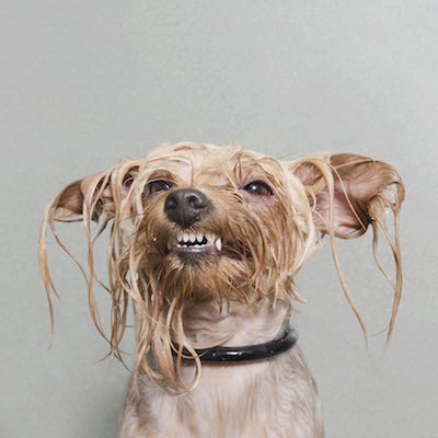 Oh oh! It's DOG BATH time!