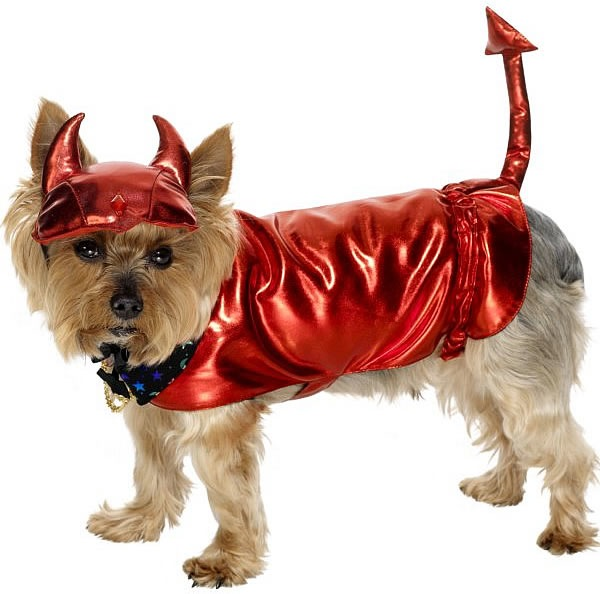 little dog in a devil's costume for halloween