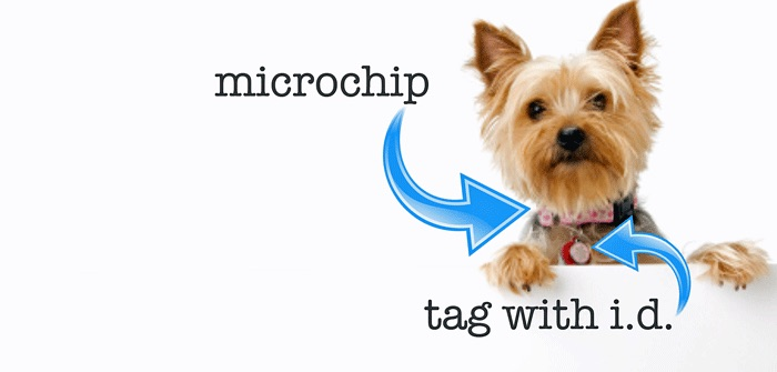 use a microchip and a dog tag for ultimate safety