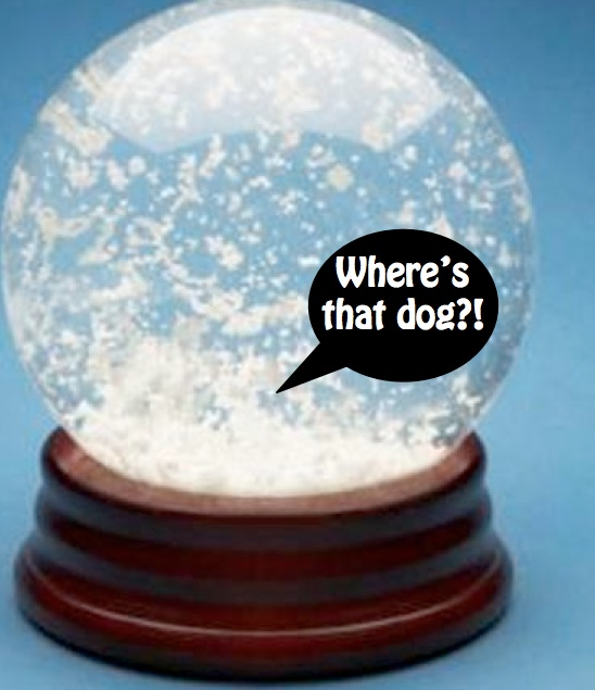 small dogs that don't shed snowglobe