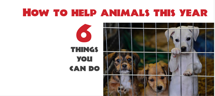 things you can do to help animals
