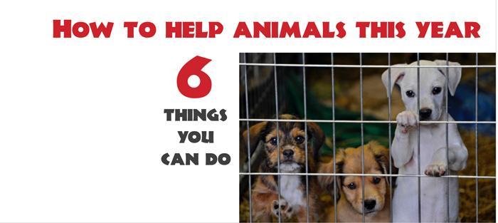 6 ways to help animals this winter