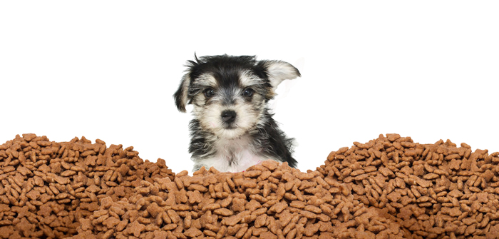 Nutrition 101: What do dogs need?