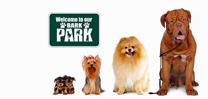 Dog Park Safety
