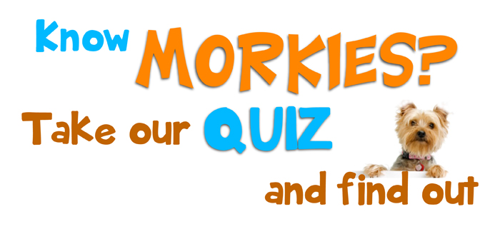 how well do you know your morkie