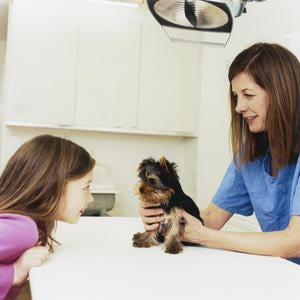 Find a Vet for your Morkie