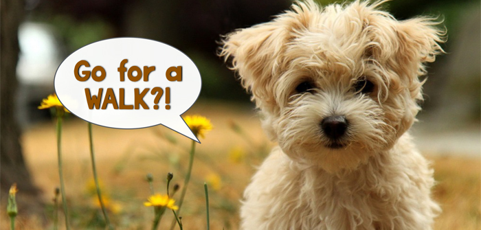 Morkie pulling on the leash? Here's what to do.