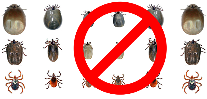 The war on ticks!
