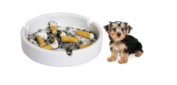 smoking isn't good for dogs