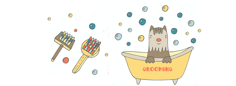Can you groom your Morkie too much?