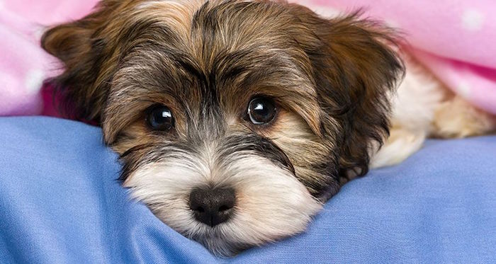 The top causes of puppy diarrhea