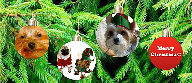Merry Christmas ornament with morkies