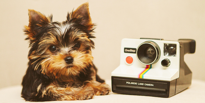 morkie puppy and polaroid camera
