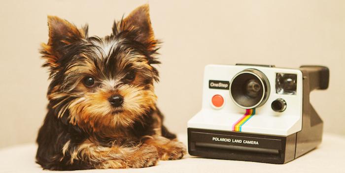 morkie puppy and polaroid camera