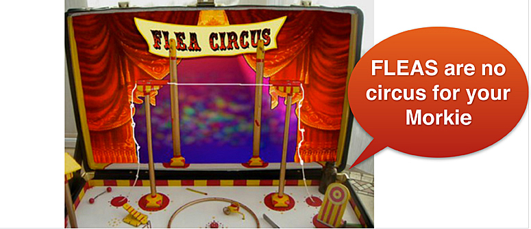 flea circus from old days