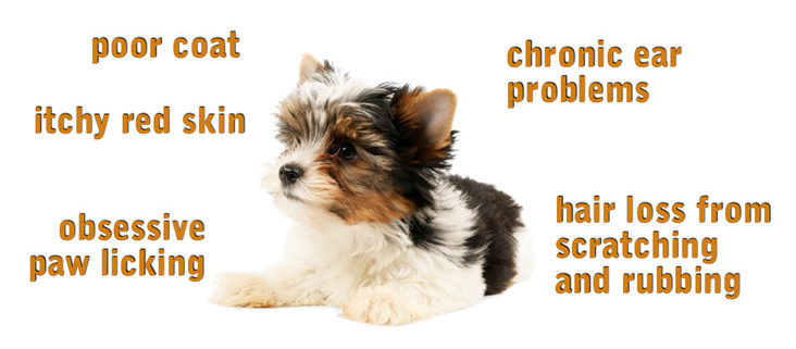 symptoms of food allergy in dogs