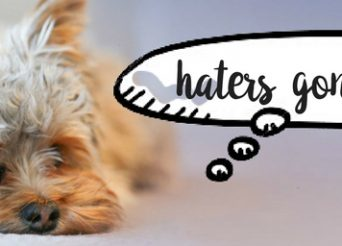 haters gonna hate small dog thinks