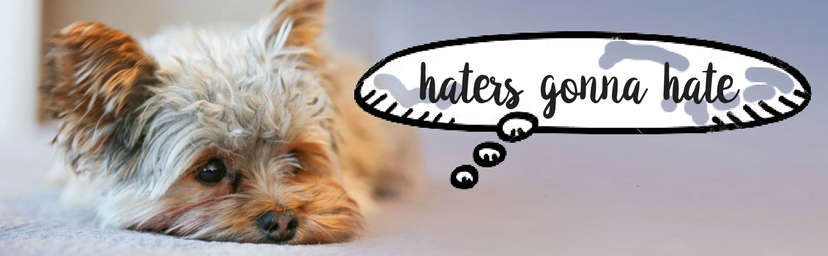 haters gonna hate thinks the small dog