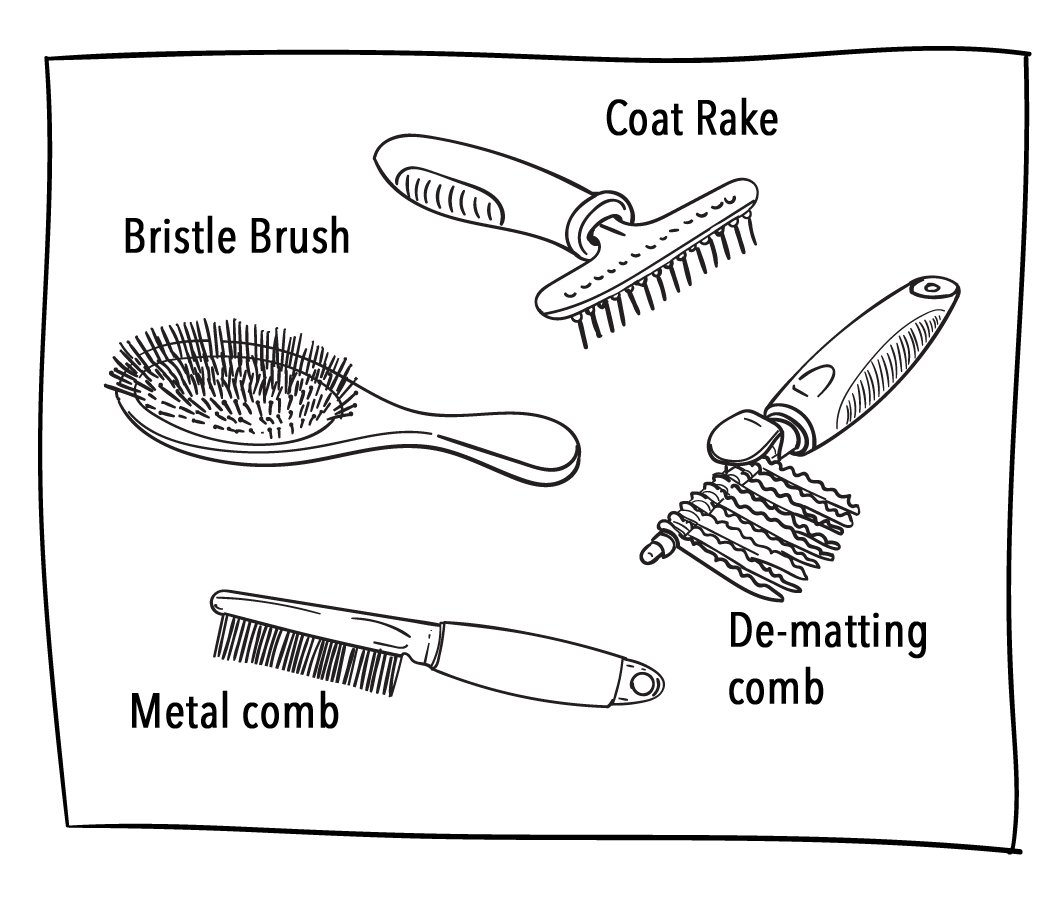 brushes and combs for morkies