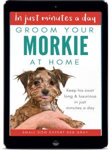 Groom your morkie at home