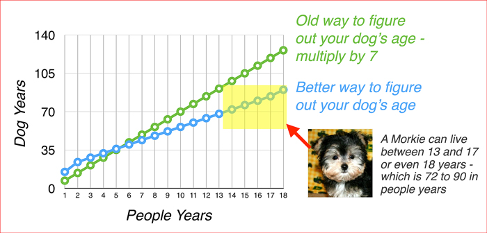 how old is your Morkie