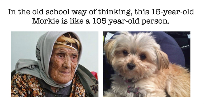 old school way to figure dog's age in people years
